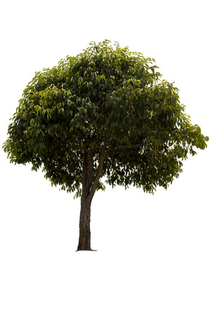 A big tree isolated on white background Standard-Bild - 112676797