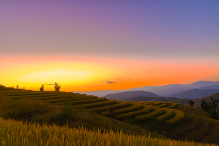 Beautiful landscape view of rice terraces in chiang mai , Thailand. Standard-Bild - 116539920