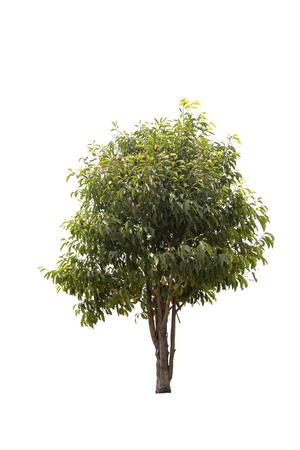 A big tree isolated on white background Standard-Bild - 116540704