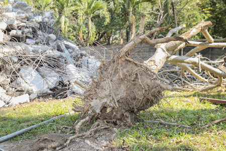 The tree and other debris was dismantled and destroyed from the earthquake. Standard-Bild - 116540832