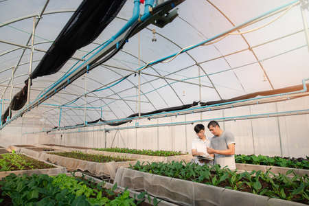 Smart agriculture technology concept - Farmer monitoring organic vegetable in plant nursery greenhouse farm. Smart agriculture technology.