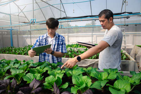 Farmers uses a tablet to take pictures of organic vegetables to track their growth in plant nursery farm. Smart agriculture technology concept. Standard-Bild