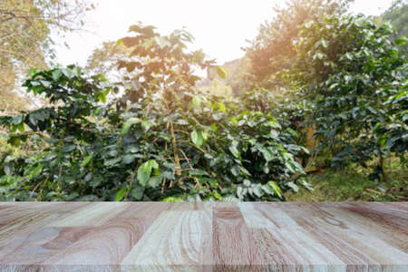 Wooden tabletop on blurred coffee plantations background, can be used for display or montage your products..