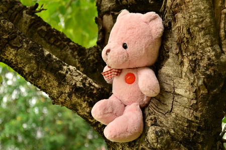 soul mate: Bear doll sit on the tree Stock Photo