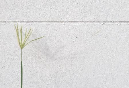 white: Green grass flower on white wall