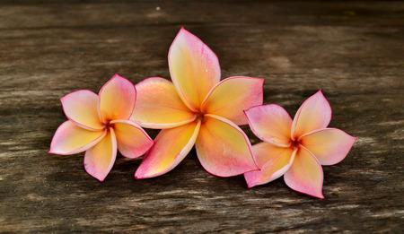 Three Plumeria flower on wood board 免版税图像