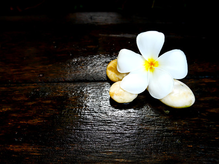 White plumeria flower on wet wooden board with copy space 免版税图像
