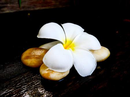 White plumeria flower with brown rock on wet wooden board