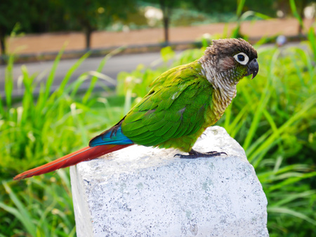 Beautiful green parrot on blur background