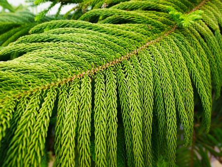 Close up green leaf in garden 免版税图像