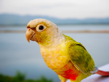 Focus beautiful colorful parrot on blur background