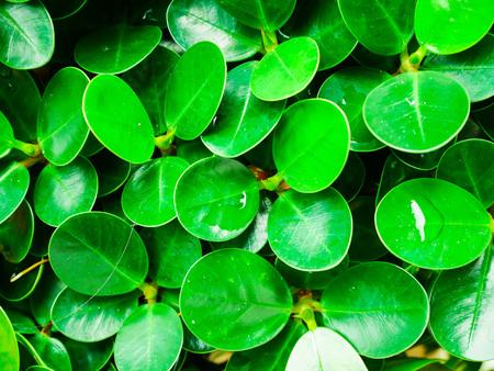 Close up dewdrop on green leaf background 免版税图像
