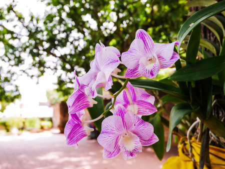Close up purple orchid flower on blur background with copy space