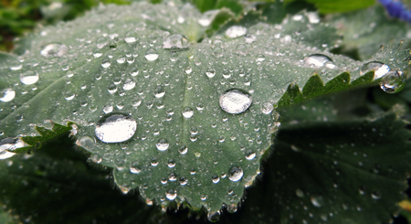 Green leaf with many drops of water