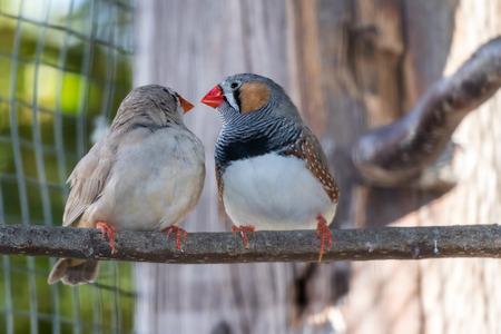 L'amour entre 2 oiseaux