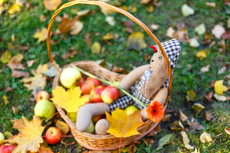 Teddy bear sits inside a wooden basket with apples on the autumn grass and a pile of yellow autumn leaves . Basket with delicious fruits in the autumn Park. Close-up and blurred background