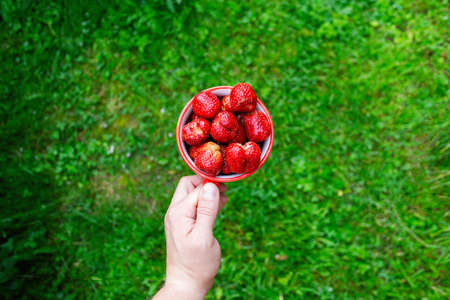 Male hands holding light brown mug filled with small red strawberries on a green background.. Horizontal angle view. Standard-Bild