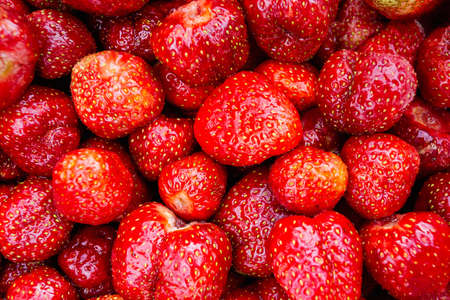 Close-up of garden strawberries grown on a farm plot. Background of red ripe strawberries. Standard-Bild