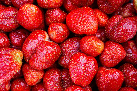 Close-up of garden strawberries grown on a farm plot. Background of red ripe strawberries. 写真素材