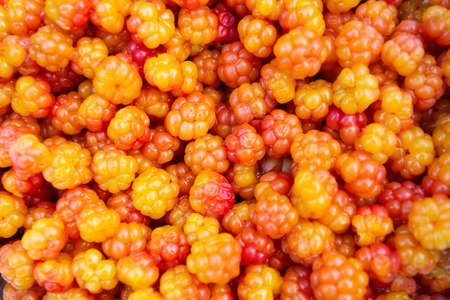 Close-up of cloudberry as a background. Collecting forest ripe cloudberries from the forest. Summer berry. The view from the top. Standard-Bild
