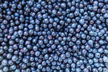 Surface is covered with a thick layer of forest blueberries, moorland harvest. Natural background. Vaccinium uliginosum (bog bilberry, bog blueberry, northern bilberry or western blueberry).