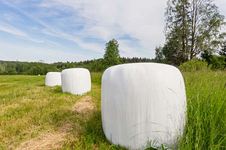 Close up packed in white plastic polyethylene haystacks. Haystacks in PVC film packaging with modern technology on the green summer field for livestock feeding. Modern agricultural technologies. Standard-Bild