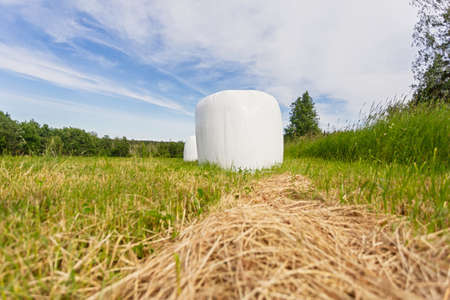 Packed in white plastic polyethylene haystack. Sloping green juicy grass and packed in plastic Bale for long-term preservation and use of livestock for food. Modern agricultural technologies.