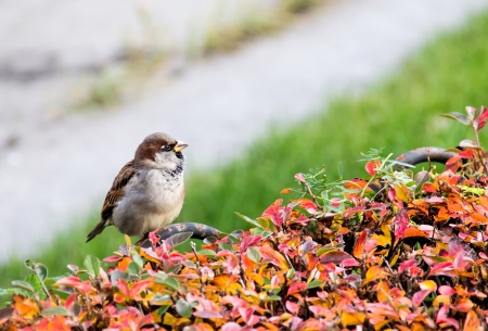 Sparrow in search of food Stock Photo