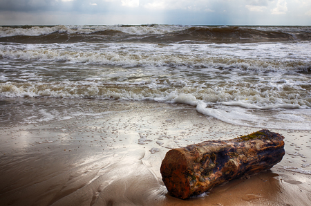 Storm on the beach. 100-year-old log threw a wave. Wet sand.