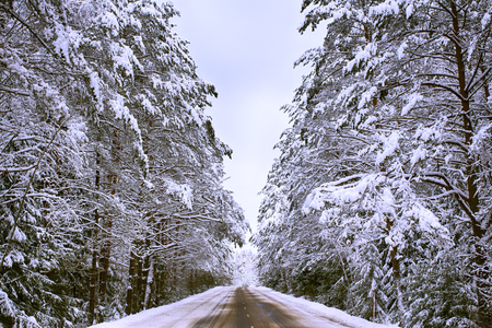 Highway through the forest. Winter, road, Spruce forest. Winter, cold landscape. Heavy snowfall.