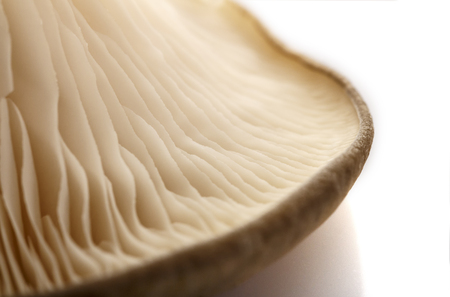 The oyster mushrooms, the inner side. Part of the fungus.