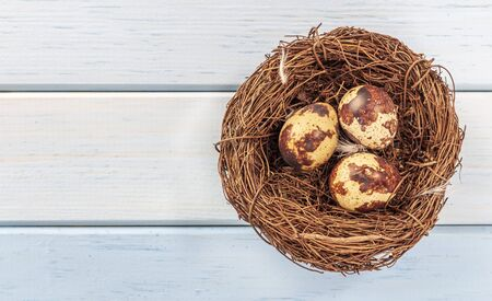 Quail eggs in the nest, Diet food, natural product. holy easter. Space for text Reklamní fotografie