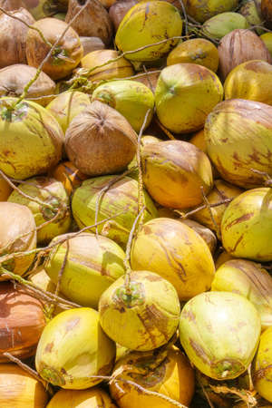 Indonesian coconut. A pile of coconuts on the counter. Asian market. Vegetarian food. A natural product. Foto de archivo