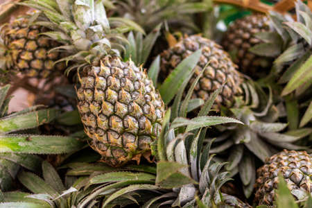 A basket of pineapples on sale in the Asian market. Natural product, healthy dessert.