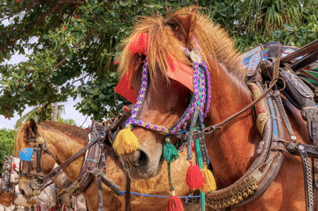 Gili Air Island in the Indian Ocean.  Pony taxi on the island. Private transport. On the island there is no equipment for fuel and lubricants. Foto de archivo