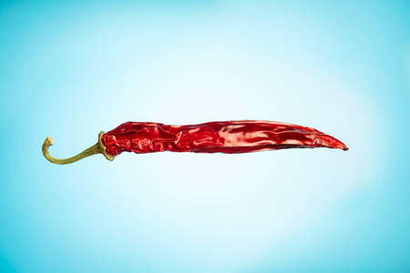 Dried red pepper pod. Blue background, space for text. Foto de archivo