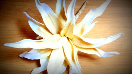 blume: Blume