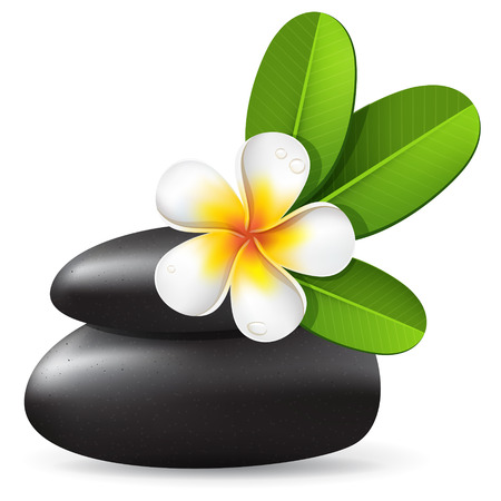 White frangipani flower with leaves and black stones, spa vector illustration with tropical plumeria and water  drops