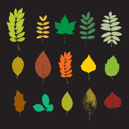 Vector colorful silhouette big leaf set Vector