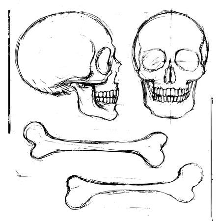 huesos humanos: Mano aislada lápiz dibuja cráneo y la tibia huesos humanos, vista frontal y lateral; objetos vectoriales