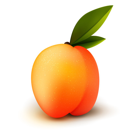 nectarine: Ripe isolated realistic peach fruit with green leaves
