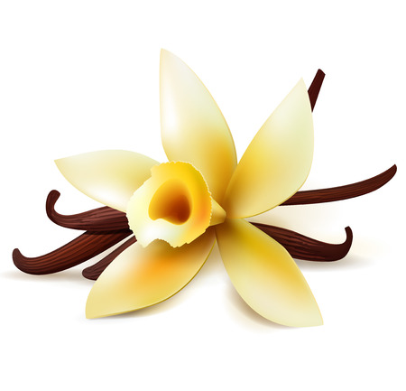 Realistic vanilla flower and pods