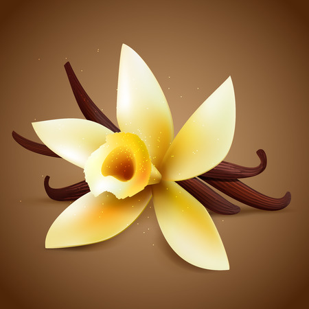 beans: Realistic vanilla flower with pods on a brown background, vector warm aroma  illustration