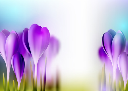 Spring realistic crocus flower bright background, vector decorative blurred  illustration with empty space Vector