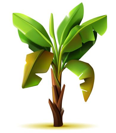 Vector realistische geïsoleerde banaan boom op witte achtergrond Stock Illustratie