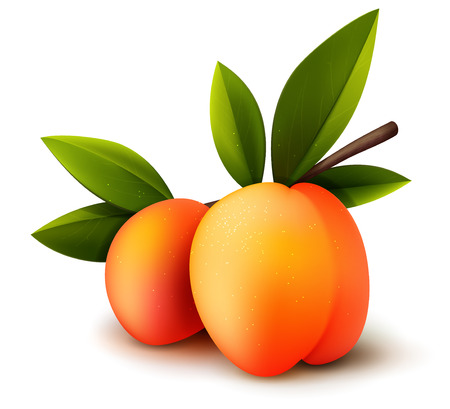 peaches: Two ripe vector isolated realistic peaches with leaves, bright fruit illustration