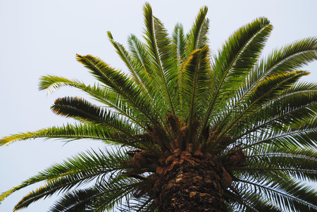 Bright palm tree top with leaves against sky