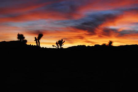 Beautiful sunset sky in Joshua Tree National Park, California, USA