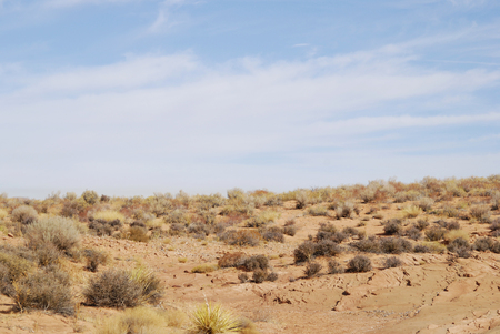 Dried desert landscape with plants, nature of Arizona