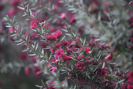 Bright little pink flowers on a branch, floral nature background Stok Fotoğraf